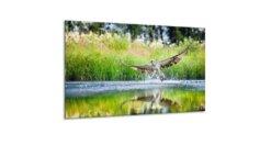 Glasschilderij Roofvogel over water - 120 x 70 cm