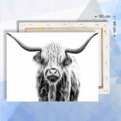 Schilderen op nummer pakket Schotse Hooglander - 40 x 50 cm - met frame