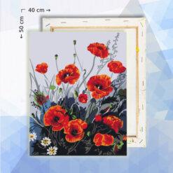 Schilderen op nummer pakket Klaprozen - 40 x 50 cm - met frame