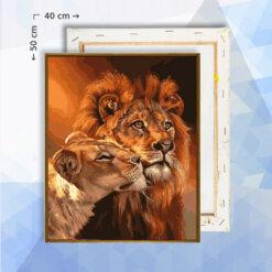 Schilderen op nummer pakket Leeuw en Leeuwin - 40 x 50 cm - met frame